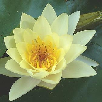 Dintr-o floare intr-o alta floare pe bolti de lumina…..