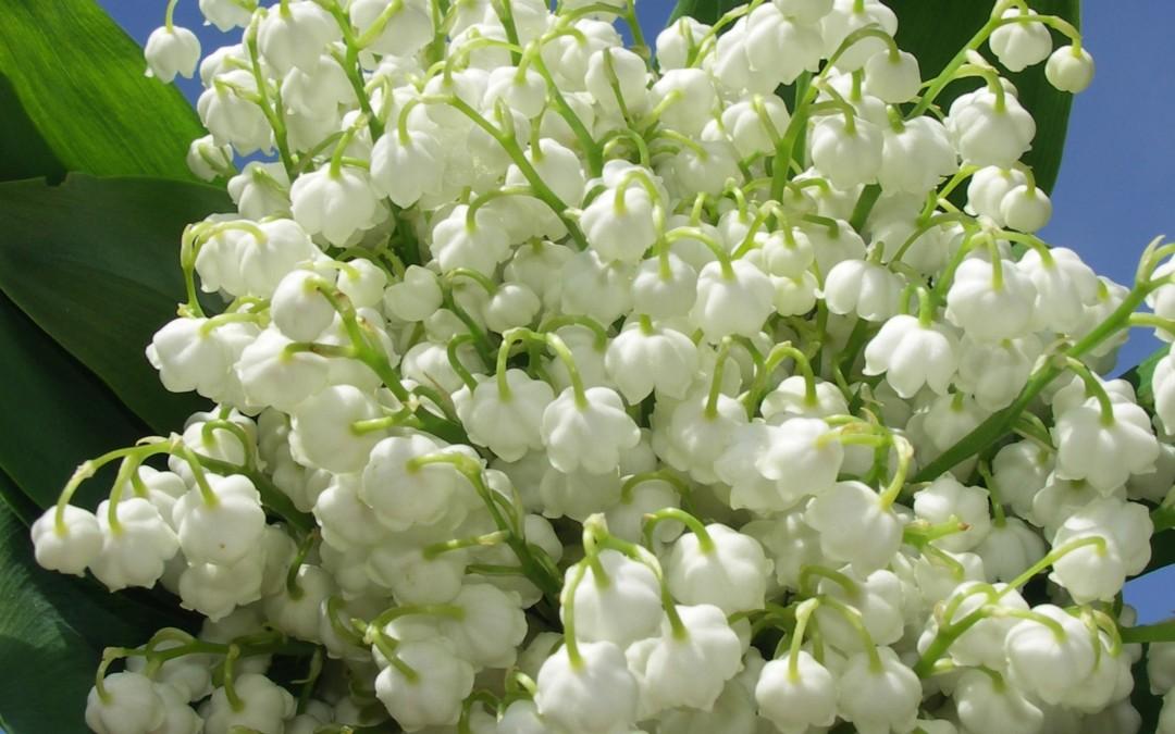 Flori interioare