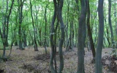Padurea Baciului