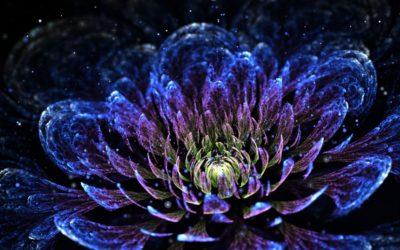 Despre Bucurania si florile unimii