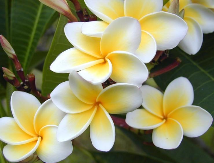 Printre florile universului/ In Thailanda