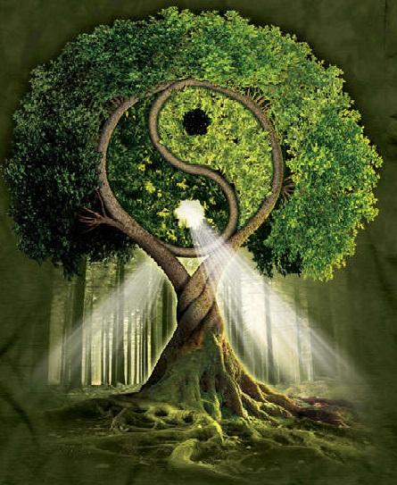 Integrarea sacra. Arborele vietii si elementele naturii, 7-8 decembrie 2019